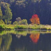 Осенний день закроет яркость ситца... :: Ирина Нафаня