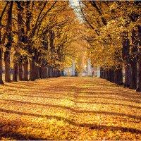 Полосатая осень :: Inara Bakej
