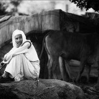 Пастух... :: Alexey Terentyev