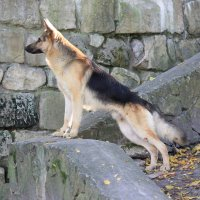 Собака - 12. :: Руслан Грицунь