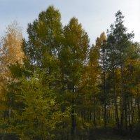 Осенний парк :: Алексей Масалов