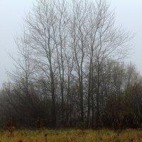 Туман рассеивается... :: Виктор Коршунов