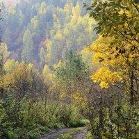 Дорога в осень... :: Алекс Б-в