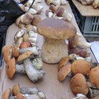 Корефан — главарь шайки грибов... :: Владимир Павлов