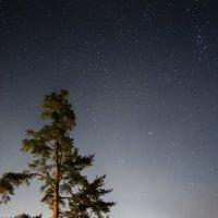 Звездная пора :: Юлия Игоревна