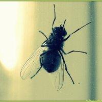 Осенний мух :: Андрей Заломленков