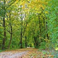 Дорога в осень :: Galina Dzubina