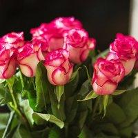 розы :: Наталья Малкина