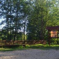 в лесу. :: владимир ковалев