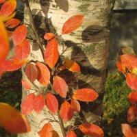 тёплая осень :: Елена