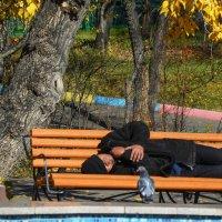 Люди и голуби :: юрий Амосов