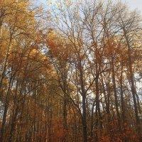 Осень, велопрогулка :: Евгений Андронов