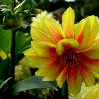 Цветы на клумбах :: Милешкин Владимир Алексеевич