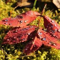Осень капельно запела... :: Надя Жукова