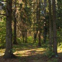 В лесу :: Юлия Строчилина