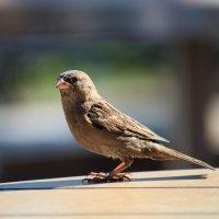 Птиц :: Тата Казакова