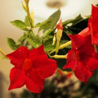 Цветы у мамы :: Александр Попов