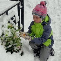 Жалко цветочек! :: Елизавета Успенская