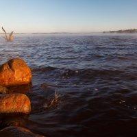 Камни прибрежные... :: Roman Lunin