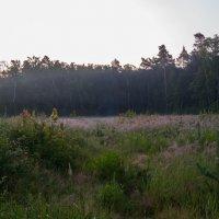 Утро в лесу :: Константин Казенов