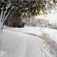 Мокрый снег. Температура днём +2 . :: bemam *