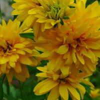 Солнечные цветы. :: Александр Атаулин