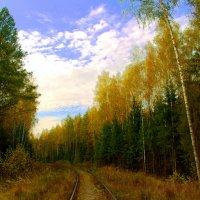 Дорога в осень :: Вячеслав Минаев