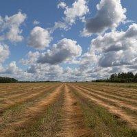 Сбор урожая :: Светлана