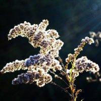 цветок осени :: юрий иванов