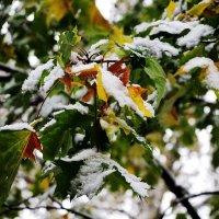 Первый снег :: Татьяна Богачева