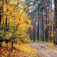 Грустной радостью эпоха листопада... :: Лесо-Вед (Баранов)