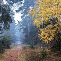 Серебрится дождевою пылью хвойное дыханье тишины... :: Лесо-Вед (Баранов)