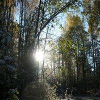 Встреча осени с зимой :: Вера Щукина