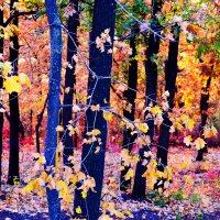 Разнаряжены леса.... :: Nina Streapan