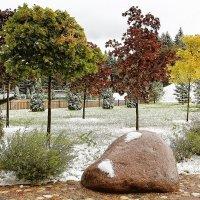 Первый снег :: DimCo ©