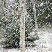 Снежное начало октября, 8.10.2015 :: Елена
