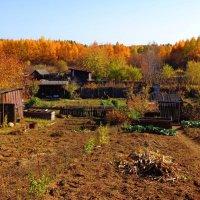 Осенние сарайчики :: Милла Корн