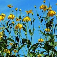 Желтые бабочки в небе :: Alexander Andronik