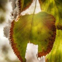 Первый снег :: Леонид