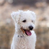 Собака летняя в октябре :: Александр Деревяшкин