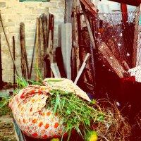 Сельская жизнь :: Натали V