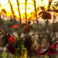 Осенние мазки.. :: ФотоЛюбка *