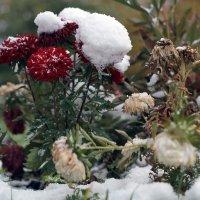 Первый снег :: Наталья Тырданова