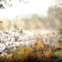 Незнакомец в тумане... :: Андрей Войцехов