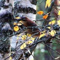 В осеннем лесу :: Александр 72 Мил
