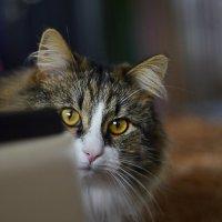 мой кот идиот... :: ганичев алексей