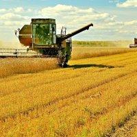 Битва за урожай :: Владимир Зыбин
