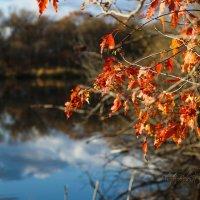 листья :: Tatyana Belova