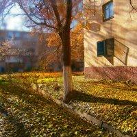 Осень на Ташкентских задворках... :: Людмила Богданова (Скачко)