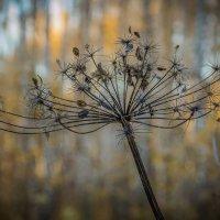 Осень :: Владимир Бобришев